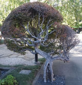 Old Tree Tennoji
